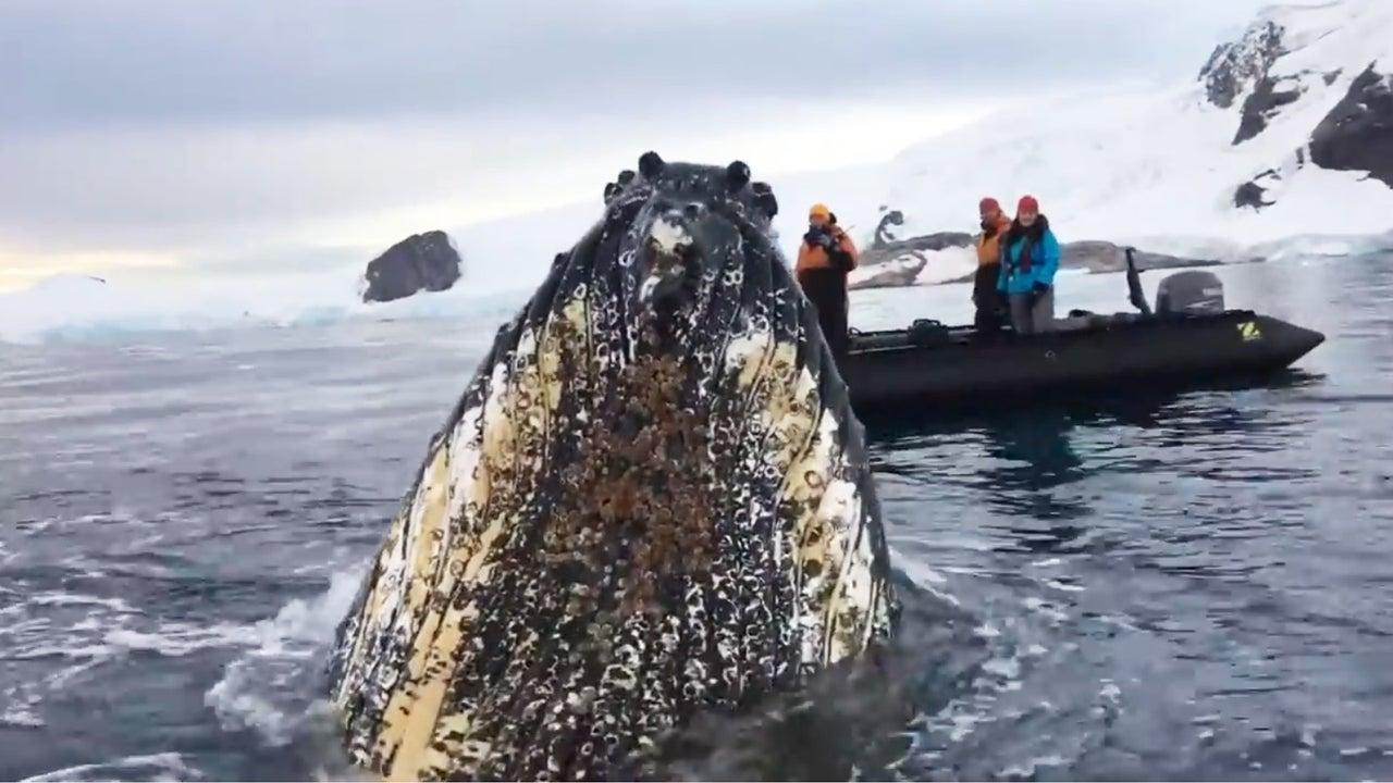 Diesen Ausflug wird eine Gruppe von Walbeobachtern nicht so schnell vergessen. Die Reisenden haben nicht damit gerechnet, den Meeresriesen so nahe zu kommen.