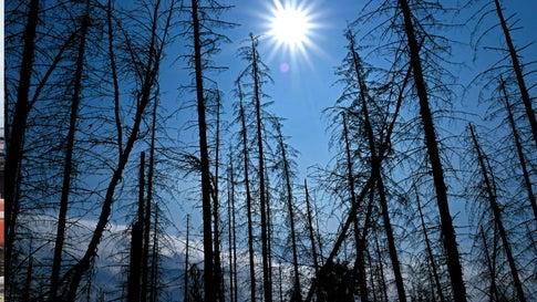 Umweltorganisation macht Mut: Die Natur kann gegen die Klimakrise selbst aktiv werden