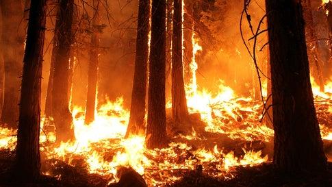 Waldbrände Alaska Karte.Schwerer Waldbrand Wütet Auf Beliebter Urlaubsinsel Gran Canaria
