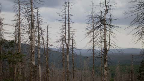 Dead forrest in the Harz National park i  Germany due to climax change
