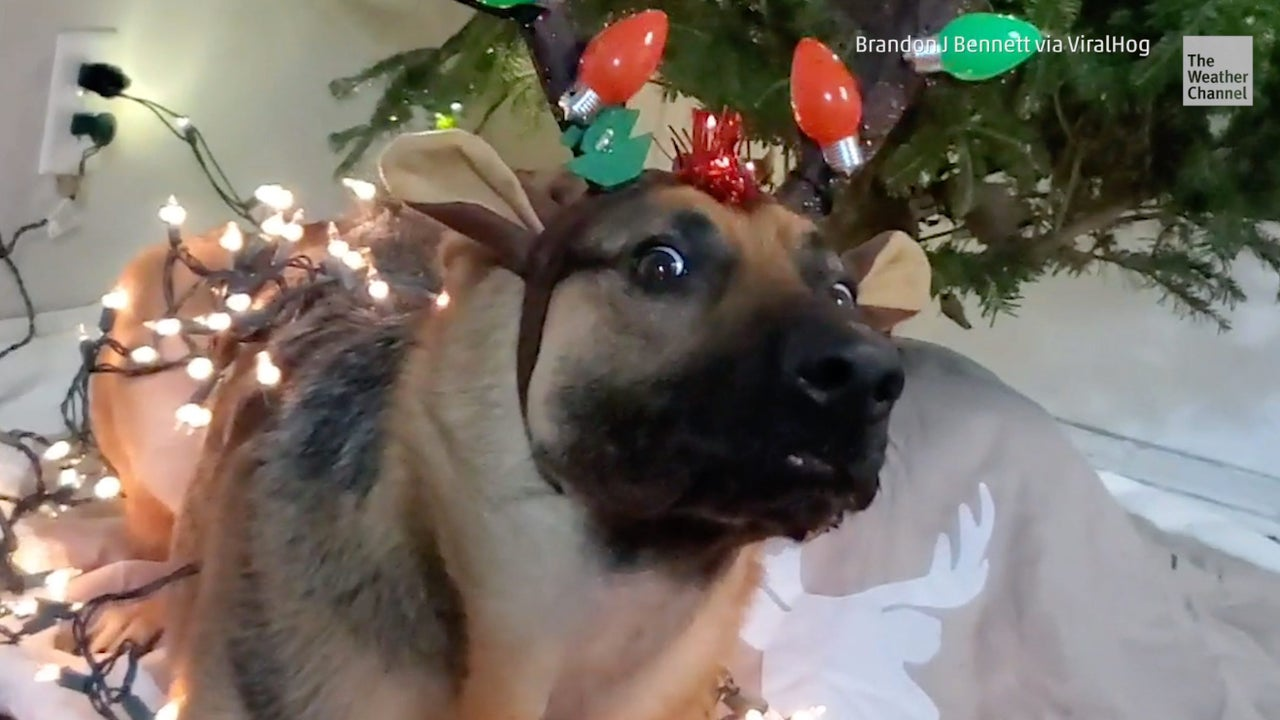 Wild video: Pup is Pumped for Christmas