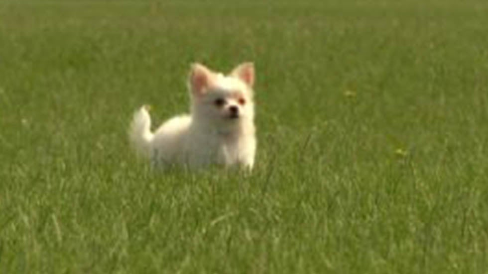 Nws Issues Small Dog Warning