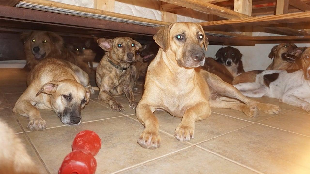 Im Haus von Chella Pillips drängen sich 97 Straßenhunde. Die Bahamaerin aus Nassau hat die Streuner vor Hurrikan Dorian gerettet. Im Interview erzählt sie von den erschreckenden Stunden, als der Monstersturm über Nassau gezogen ist.