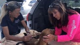 Dog Rescued from Rubble in Bahamas Month After Hurricane Dorian