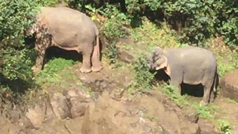 Six Elephants Die in Thailand After Calf Slips, Falls Down Waterfall