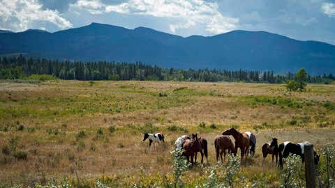 Horses graze on the Eden Valley Reserve, Alta., on Aug. 25, 2011. Alberta's natural beauty is still largely intact but parts of it are disappearing at rates that exceed deforestation in the Amazon rain forest. The most complete study yet from the group that monitors the human footprint in Alberta has found that 70 per cent of the province is still intact, mostly in the North. The changes are coming most quickly in the foothills, which saw a 38 per cent increase in impacted ecosystems. (Jeff McIntosh/THE CANADIAN PRESS)