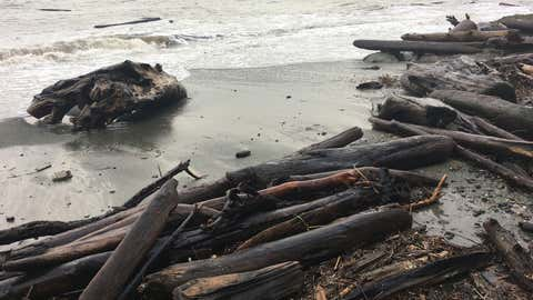 Debris on the beach at Fred Gingell Park following a wind storm. (Photo Courtesy James Cybulski)