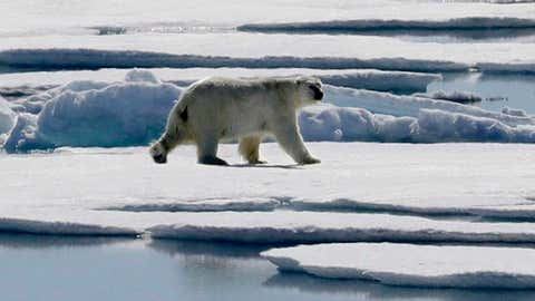 In this July 21, 2017 file photo a polar bear walks over sea ice floating in the Victoria Strait in the Canadian Arctic Archipelago. An analysis of dozens of blogs that question the threat climate change poses to polar bears has found those publications ignore virtually all the science on both the bears and sea ice. David Goldman/THE CANADIAN PRESS/AP)