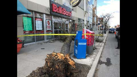 A tree came down in front of a Bulk Barn at Bloor Street West and Windemere Avenue, striking a man in his 50s. He was taken to hospital but there's no word on his condition.