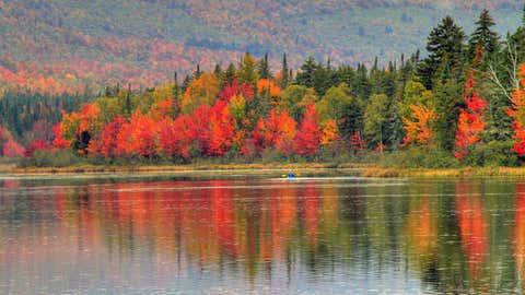 El rojo destaca en el otoño en New Hampshire, en EEUU. CAPPI THOMPSON
