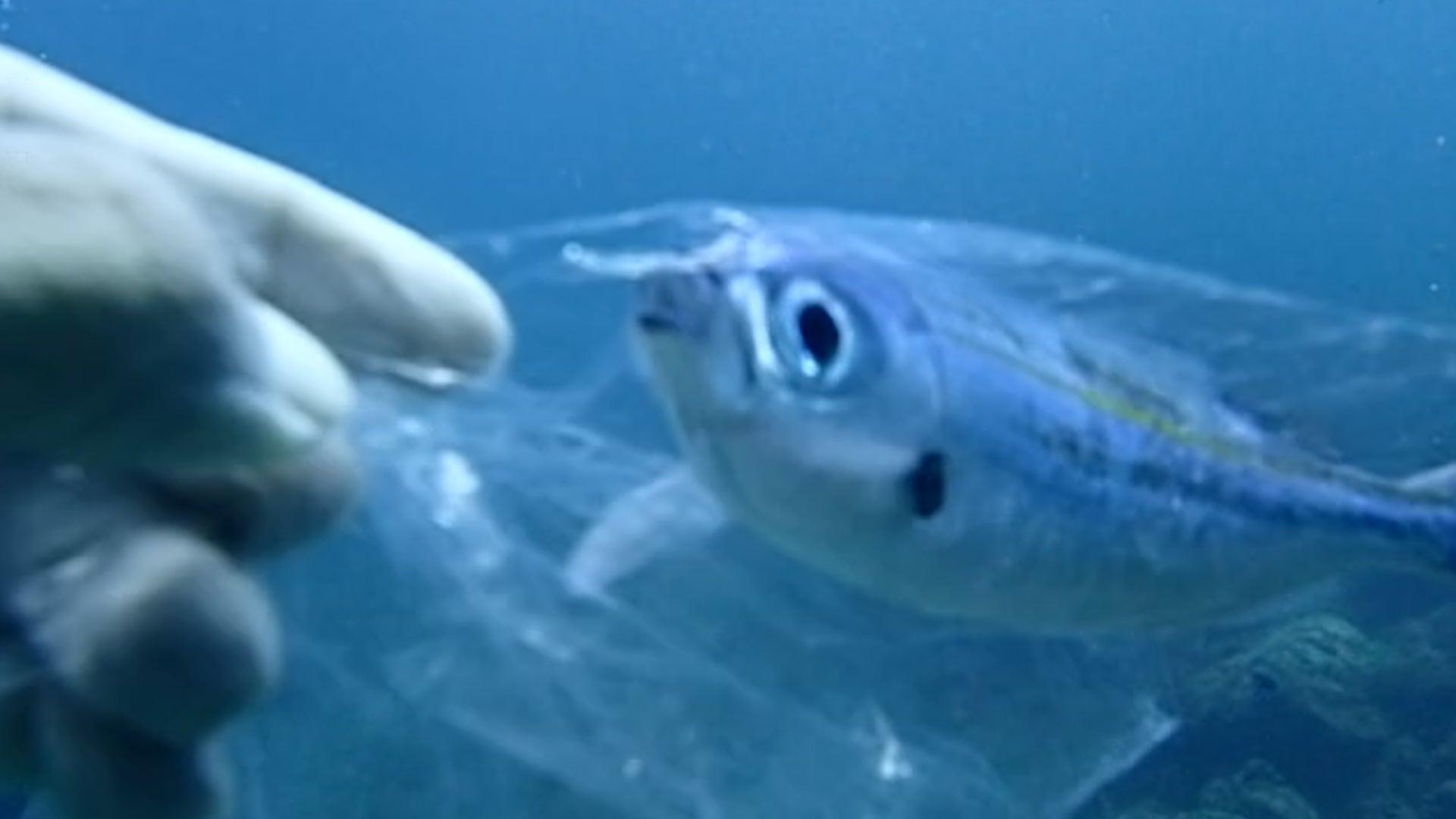 Fish Struggles to Escape Plastic Bag in Ocean Off Coast of Thailand