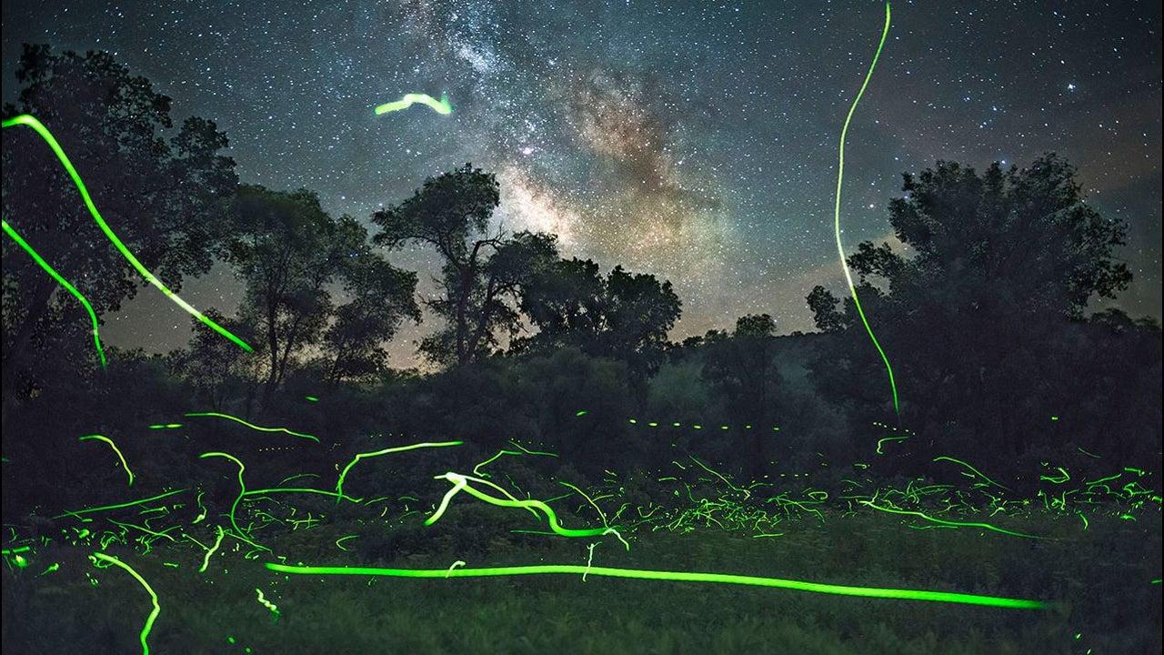 Feuerwerke gibt es nicht nur von der Menschenhand, sondern auch von der Natur erschaffen. Zumindest, wenn man den Blick dafür hat. Hier sind es Glühwürmchen, die unter dem Sternenhimmel leuchten – magisch in Szene gesetzt von dem US-Fotografen Adam Dorn.