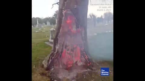 De nombreuses vidéos montrent des arbres rougeoyants à l'intérieur, mais intacts à l'extérieur. (Capture Weather.com)