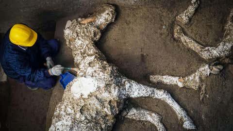 L'animal a vécu il y a près de 2000 ans. (SIPA)