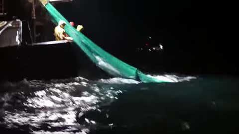 Entre 6000 et 10 000 mammifères seraient pris chaque année dans les filets. (capture Youtube Sea Shepherd)