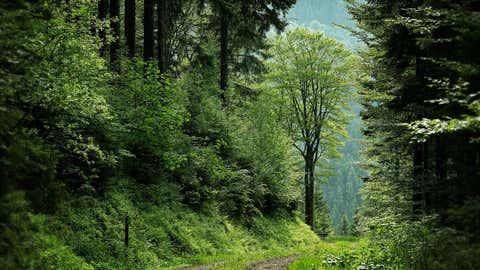 Deux Tarnais veulent planter une forêt mêlant des dizaines d'essences locales. (Illustration/CCO)