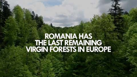 Les groupes ont lancé une campagne, «DeforestationBeat». (Capture Youtube NRJ Romania)