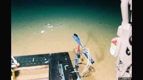 Un sachet a été retrouvé au fond de la Fosse des Mariannes, à 11 km sous la surface (Crédit Jamstec)