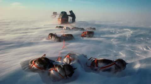 Jean-Louis Etienne et ses chiens de traîneaux, lors de l'expédition Transantarctica, au Pôle Sud, en 1990 (Crédit Jean-Louis Etienne)