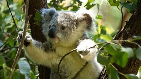 Un nouvel exemple de cruauté envers un animal soulève l'indignation en Australie. (CCO)