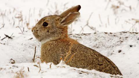 Une étude souligne l'évolution du comportement de ces animaux. (CCO)