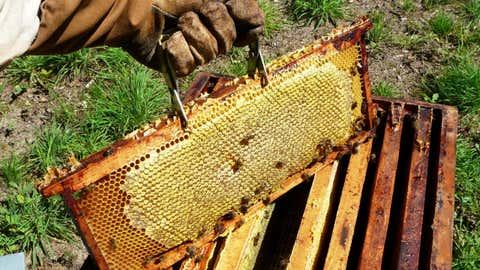 Pour les professionnels, elles sont plus que jamais victimes des pesticides. (CCO)