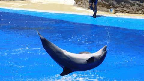Un dauphin dans un parc animalier. (CCO)