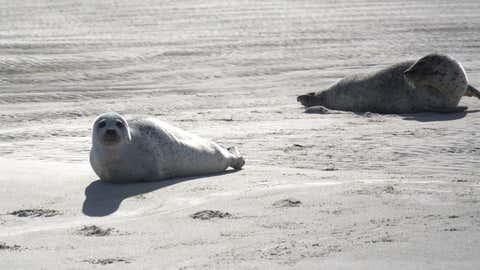 Le cas de deux animaux abattus sur une plage le 6 mai a ému les écologistes. (CCO)