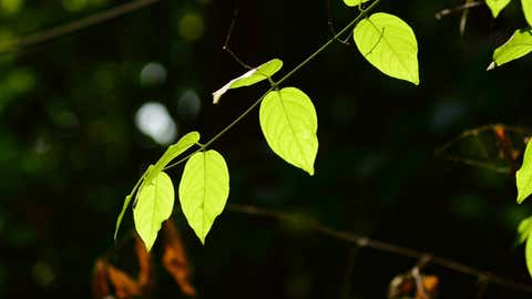 Des chercheurs ont réussi à créer une plante lumineuse. (CCO)