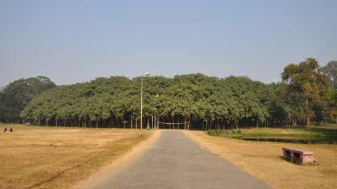 Le Banian deHowrah, en Inde, est l'arbre le plus vaste au monde. (CCO)