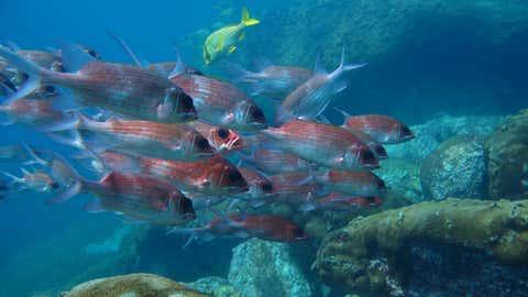 Le rôle écologique des poissons jugés beaux est quant à lui minime. (CCO)