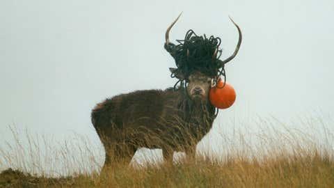 Un cas de cerf pris au piège, dans le même parc naturel Écossais. (© Scottish Natural Heritage)