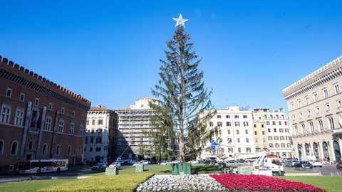 L'arbre, flétri et sec, provoque un scandale dans la capitale italienne. (LucaNobili via @Twitter)