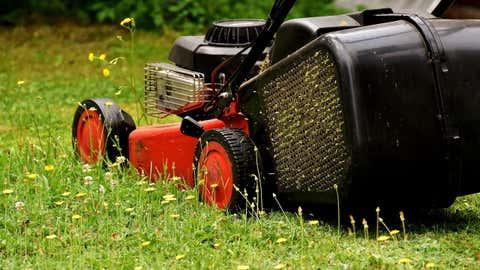 Organismes vivants, les brins d'herbe émettent cette odeur lorsqu'ils sont attaqués. (CCO)