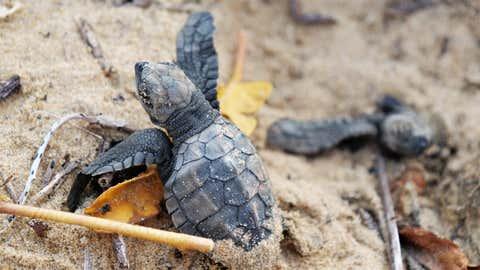 Les tortues marines sont communes en Méditerranée. (Illustration/CCO)