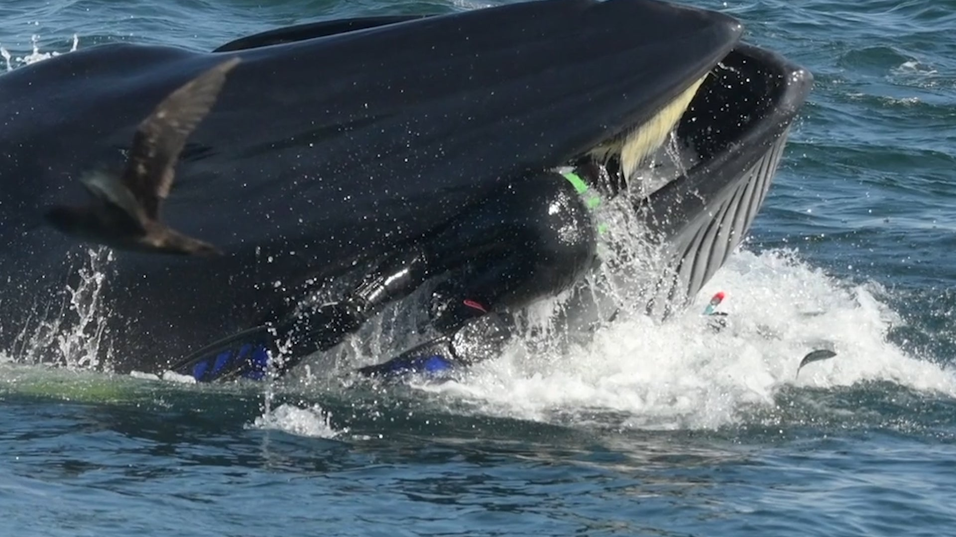 Man Spat Out by Whale off South African Coast