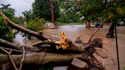 A flooded area and a downed tree caused by Tropical Storm Laura in Salinas, Puerto Rico, on Aug. 22, 2020. (Ricardo Arduengo/AFP via Getty Images)