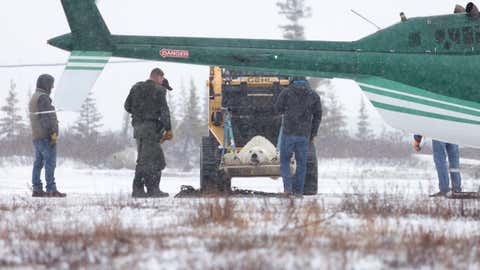 A tranquillized polar bear is delivered by helicopter to the Polar Bear Holding Facility on 16 November 2016 in Churchill, Manitoba, Canada. Polar Bears who don't stay away from humans are held here until the sea ice forms and they can be safely released back into the wild.
