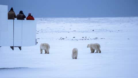 Mother and her two cubs being observed by unidentifiable people on the observation deck of a snow vehicle.