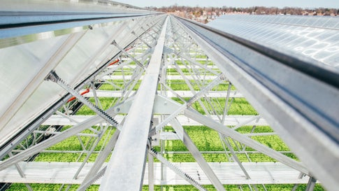 How Urban Farming With Hydroponics Can Help Feed the World While Saving Water