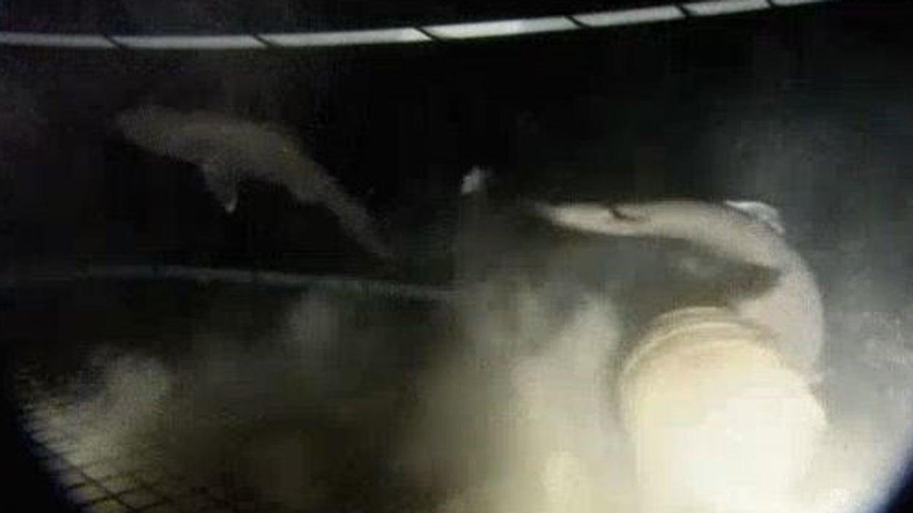 Die Tiefsee ist ein gefährlicher Ort – selbst für eines seiner größten Raubtiere wie den Hai. Dieses Video, das bereits 2017 gepostet wurde und nun erneut im Netz für Aufsehen sorgt, zeigt eine Szene, die Forscher bis heute zum Rätseln bringt.