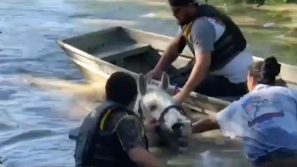 Horses Rescued from Floodwaters in Oklahoma