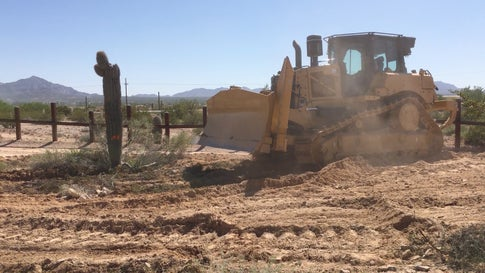 Outrage as Iconic Cactuses Bulldozed for Border Wall in Arizona