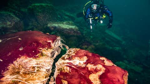 A scuba diver observes the purple, white and green microbes covering rocks in Lake Huron's Middle Island Sinkhole. (Phil Hartmeyer, NOAA Thunder Bay National Marine Sanctuary)