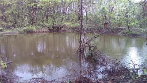 Tranquil, clear water in Vanvadis oldest rain harvesting pond. (Sanjiv Valson and Rishi Gangoli)
