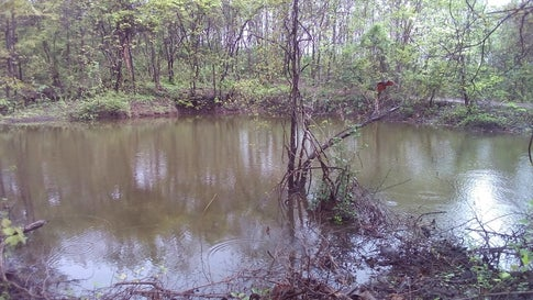 Tranquil, clear water in Vanvadis oldest rain harvesting pond. (Sanjiv Valson and Rishi Gangoli)