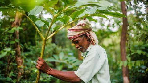 Mahadu Bua holding an edible forest plant of 'lot', a wild yam, found abundantly at Vanvadi. (Sanjiv Valson and Rishi Gangoli)