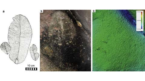 The discovered imprints from cave. (Gondwana  Research)