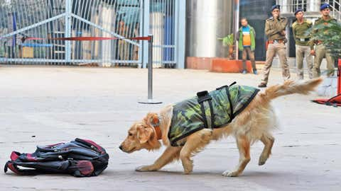 Representational image of a sniffer dog (Ranjit Kumar/BCCL Delhi)