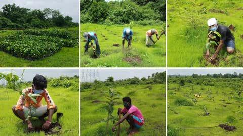 Plantation work in Mumbai. (Grow trees.com)